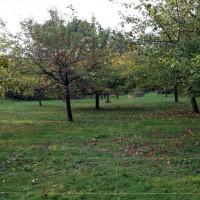 Apfelbaumgruppe