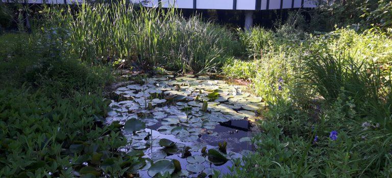 Der Teich erwacht zu Leben