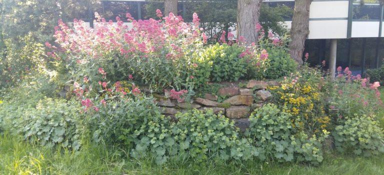 Sommer Trockenmauer
